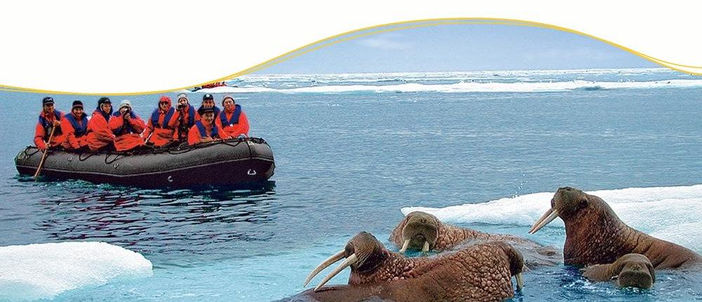 Zodiac-Anlandungen, Antarktis