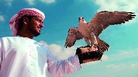 Der Falke, Wappentier der VAE