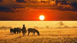 Mit Camper durch Botswana