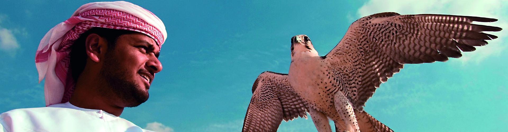 Jagdfalke - Wahrzeichen der Emirate