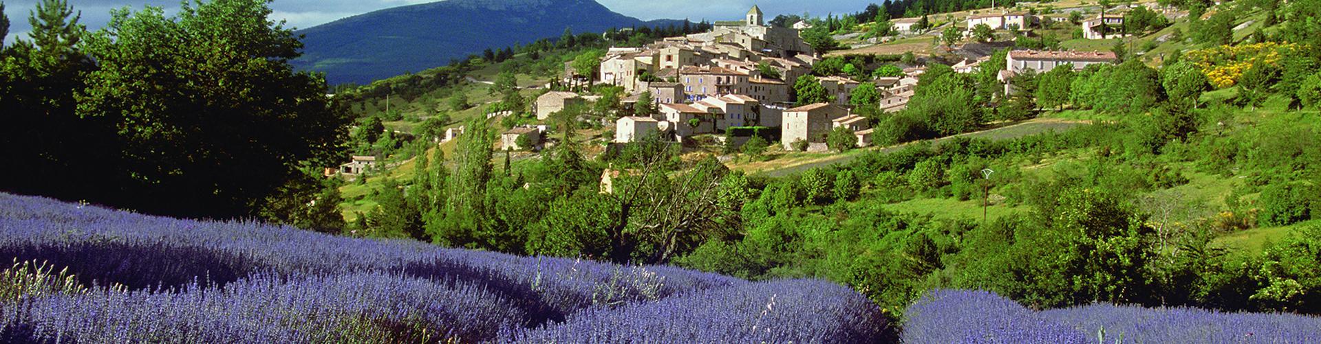 Provence erleben mit A-ROSA Flusskreuzfahrten
