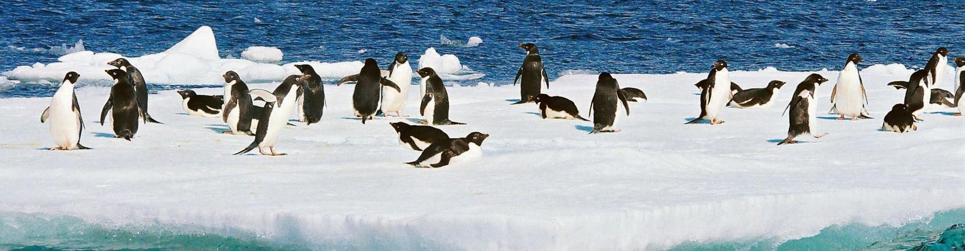 Pinguine mit Hapag Lloyd Expedition