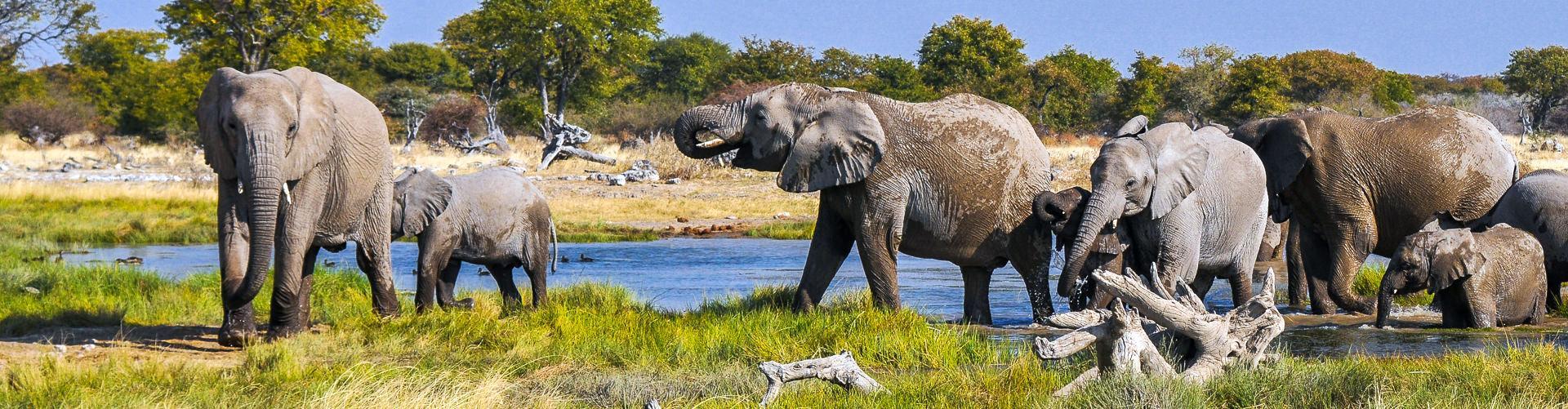 Südafrika mit Chamäleon Reisen