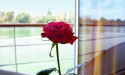 A-ROSA Main Romantik - Empfehlung der Woche ab 1059 €. Buchbar bis 17.05.2021