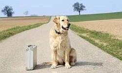 Ferienhaus mit Hund