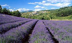 Korsika - Wandern mit Genuss