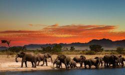 Südafrika - Krüger NP