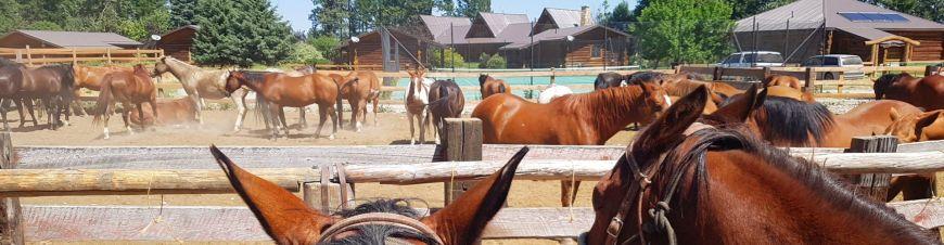 Urlaub mit Pferden auf der Three Bars Ranch in Kanada